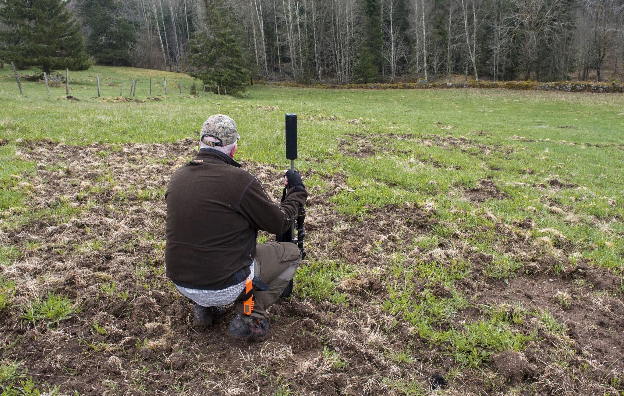 Utan jakt skulle vildsvinsskadorna öka på odlad mark. 3. Älgstammen skulle fördubblas på tre år utan jakt. Foto: Mari Ermeland