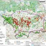De belgiska myndigheterna har hittills konstaterat 480 fall av afrikansk svinpest hos vildsvin.