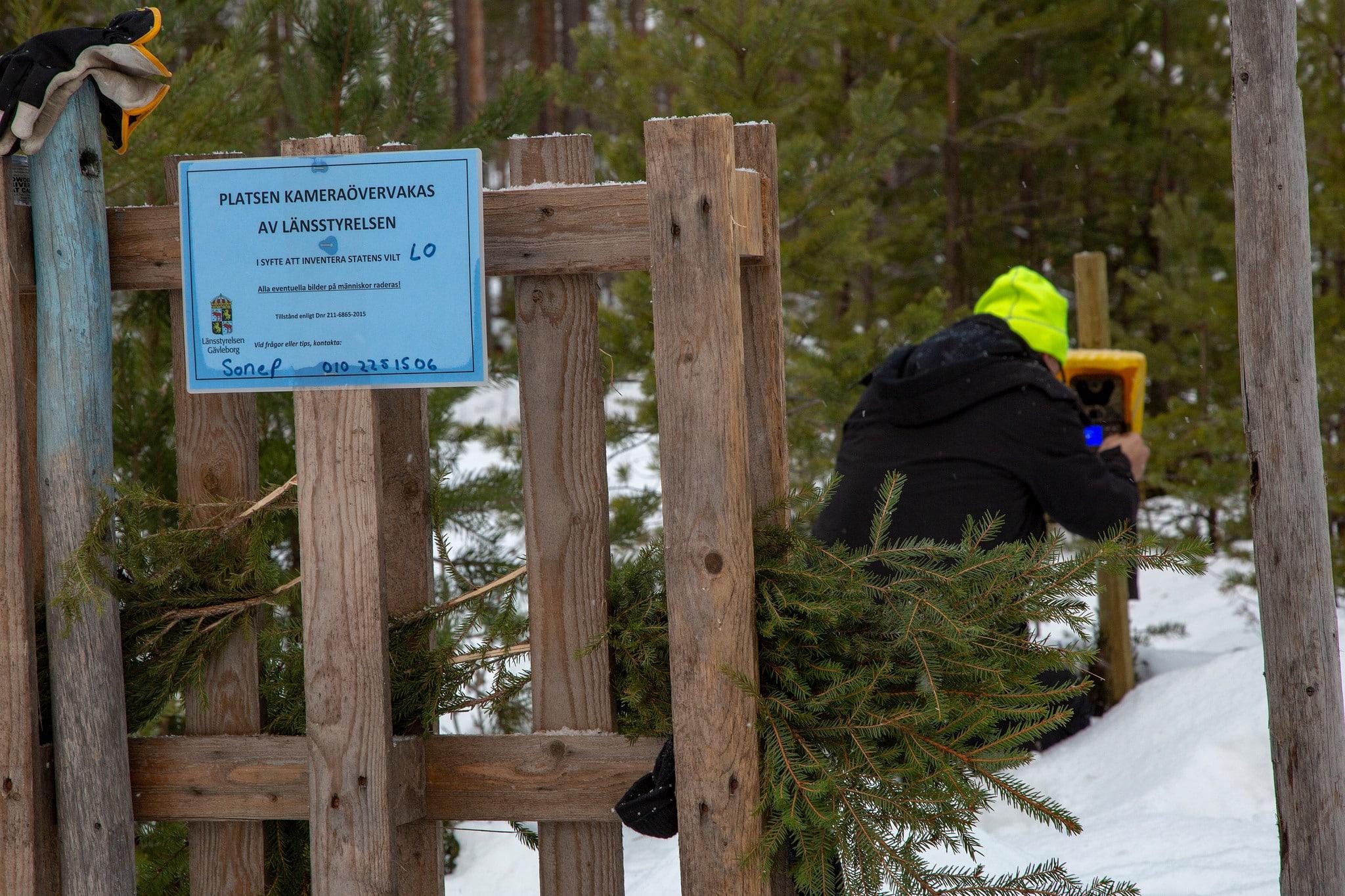 Länsstyrelsen sätter upp en viltkamera vid en av myndighetens egna kamerastationer.