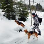 Lojakt med american foxhound