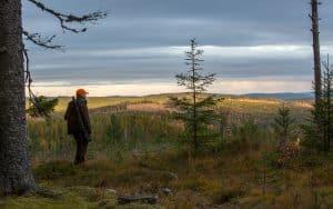 Älgen är ingen parasit och contortan är inget fiasko, skriver SCA Skogs vd Jonas Mårtensson i en replik.