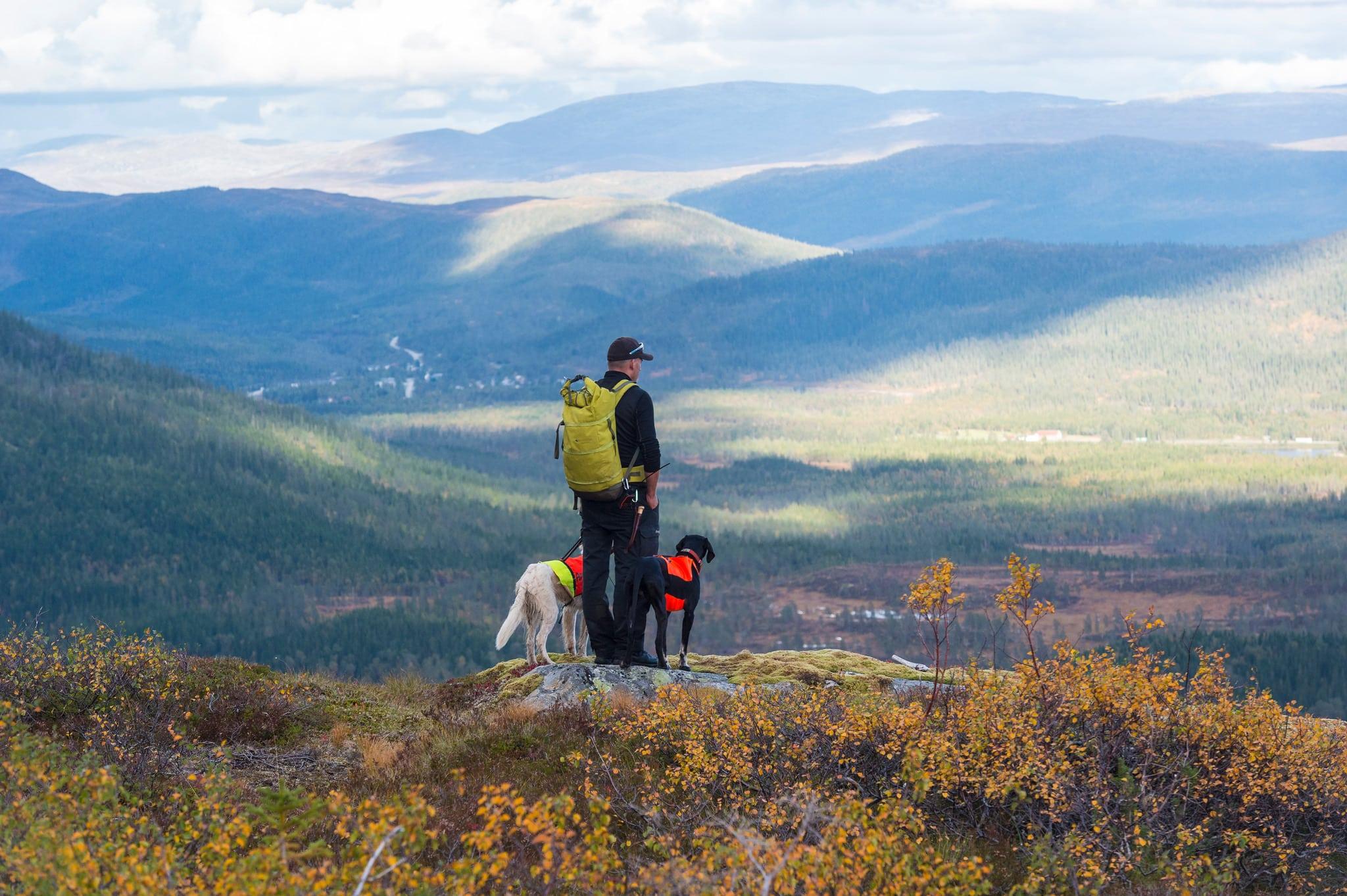 Trots att regeringen vill ge boende i Sverige förtur till småviltjakten i fjällen i inledningen av jakten är det fortsatt många jägare som tvingas ha sina hundar i koppel på grund av avlysta områden.