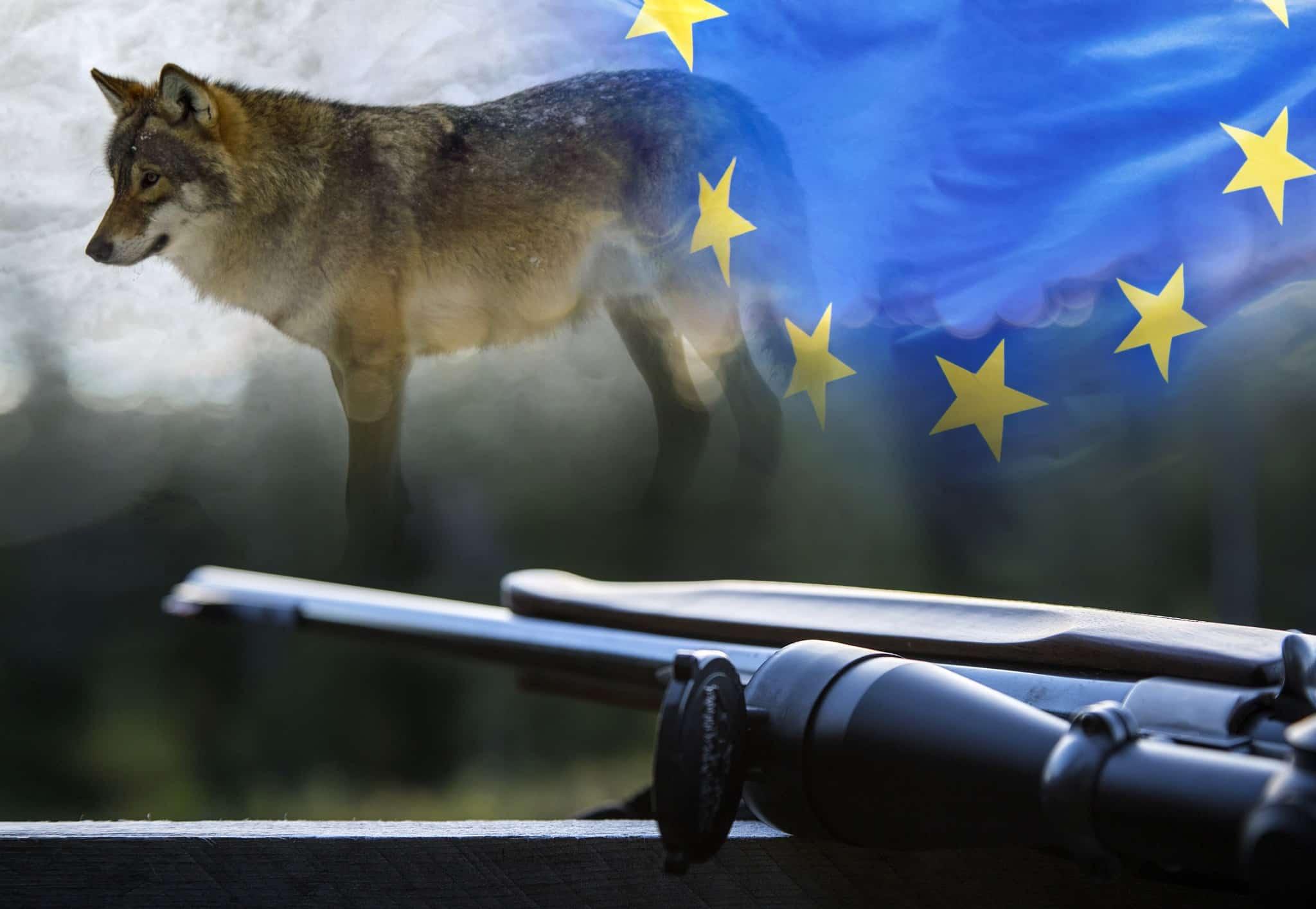 EU-valet i maj har stor betydelse för jägarna i Sverige. Två av de stora frågorna under den gångna mandatperioden har varit varg och vapen. Foto: Olle Olsson samt Mostphotos.