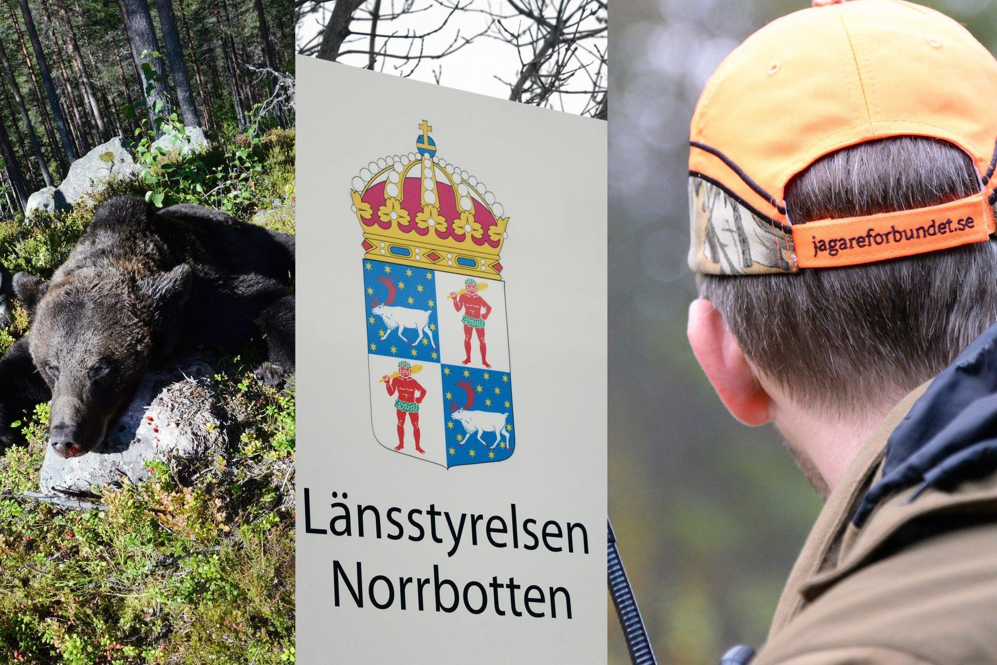 Nu ifrågasätter Jägareförbundet Norrbotten om länsstyrelsens skyddsjaktsbeslut på björn ligger i linje med länsstyrelsens egna riktlinjer. Foto: Lars-Henrik Andersson