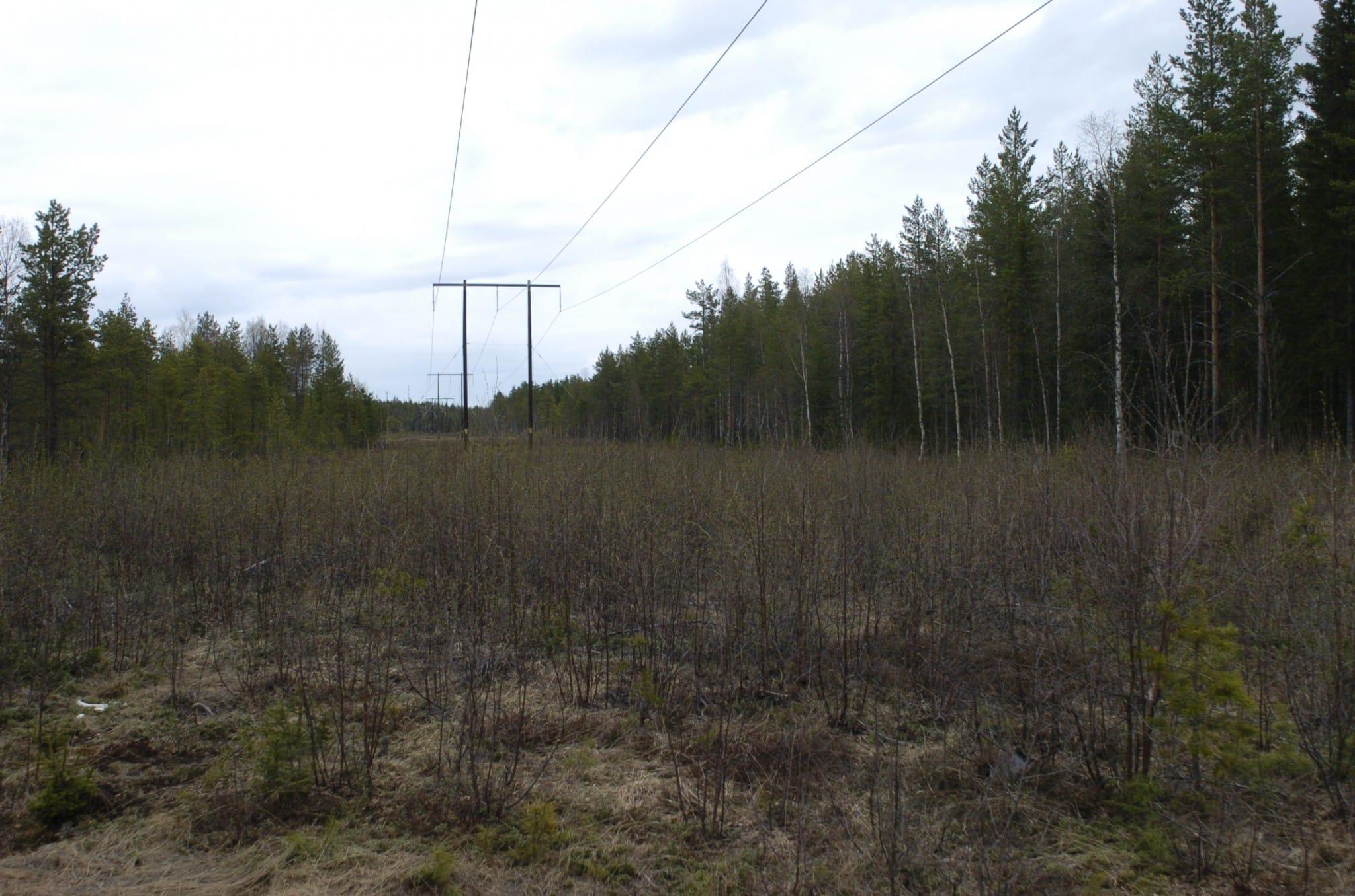 En kraftledningsgata producerar mycket viltfoder om man undviker att röja den ner till svarta jorden. Foto: Bernt Karlsson