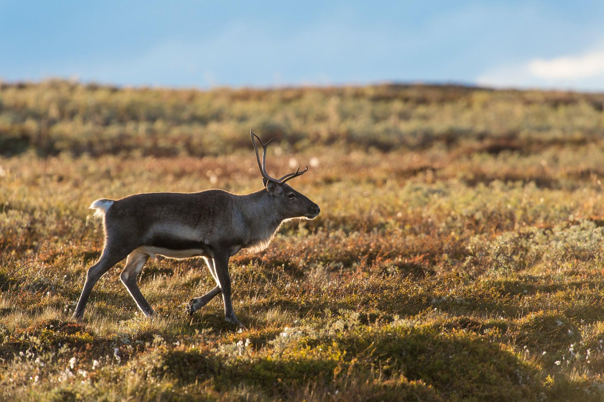 Det är anmärkningsvärt att länsstyrelsen slentrianmässigt avlyser småviltjakten istället för att bereda jägare tillgång till naturen och jakten, anser skribenten.