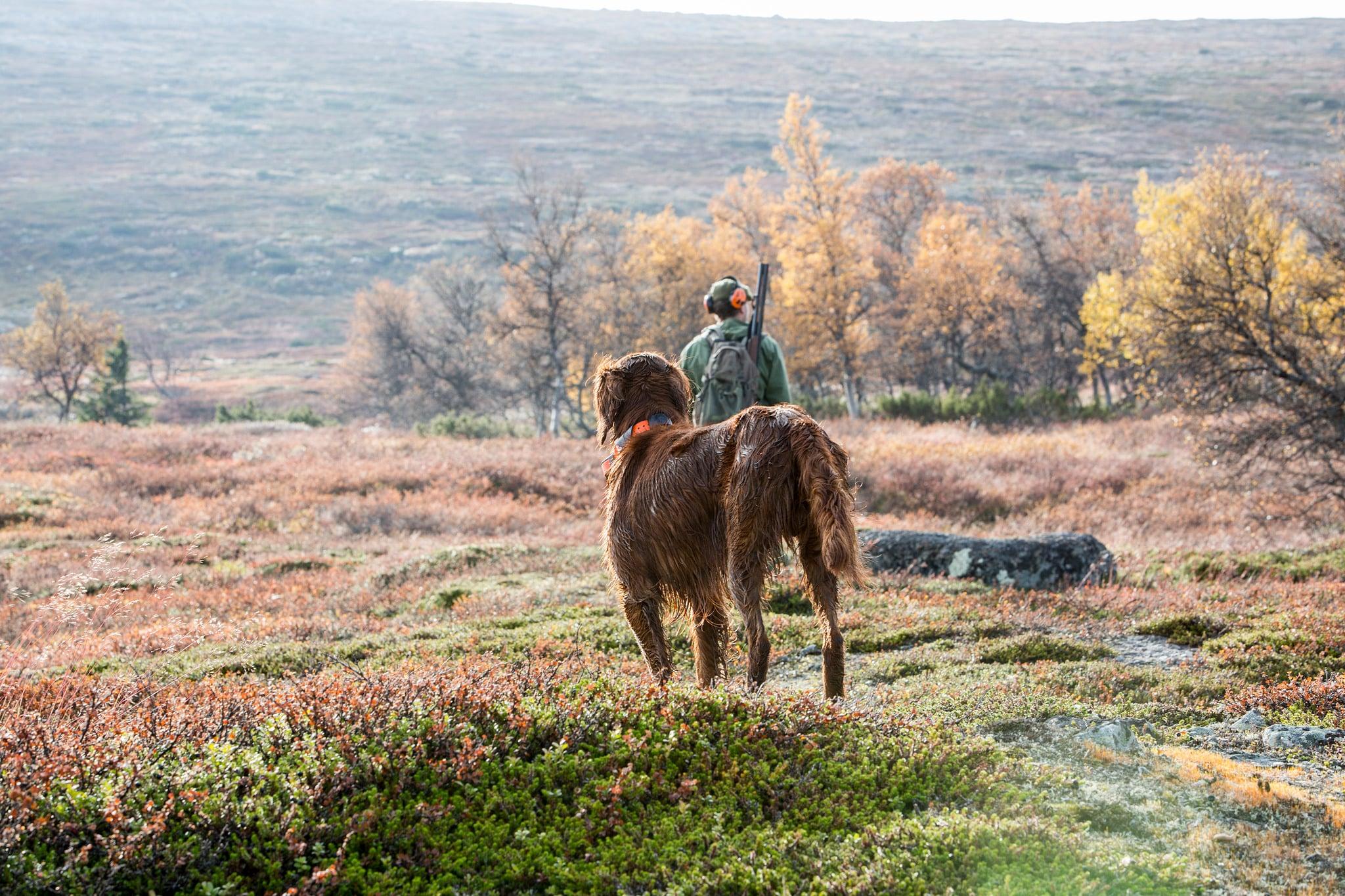 Svenska Kennelklubben vill att norska jakthundar stannar hemma, tills det finns klarhet i vad som orsakat sjukdomsutbrottet.