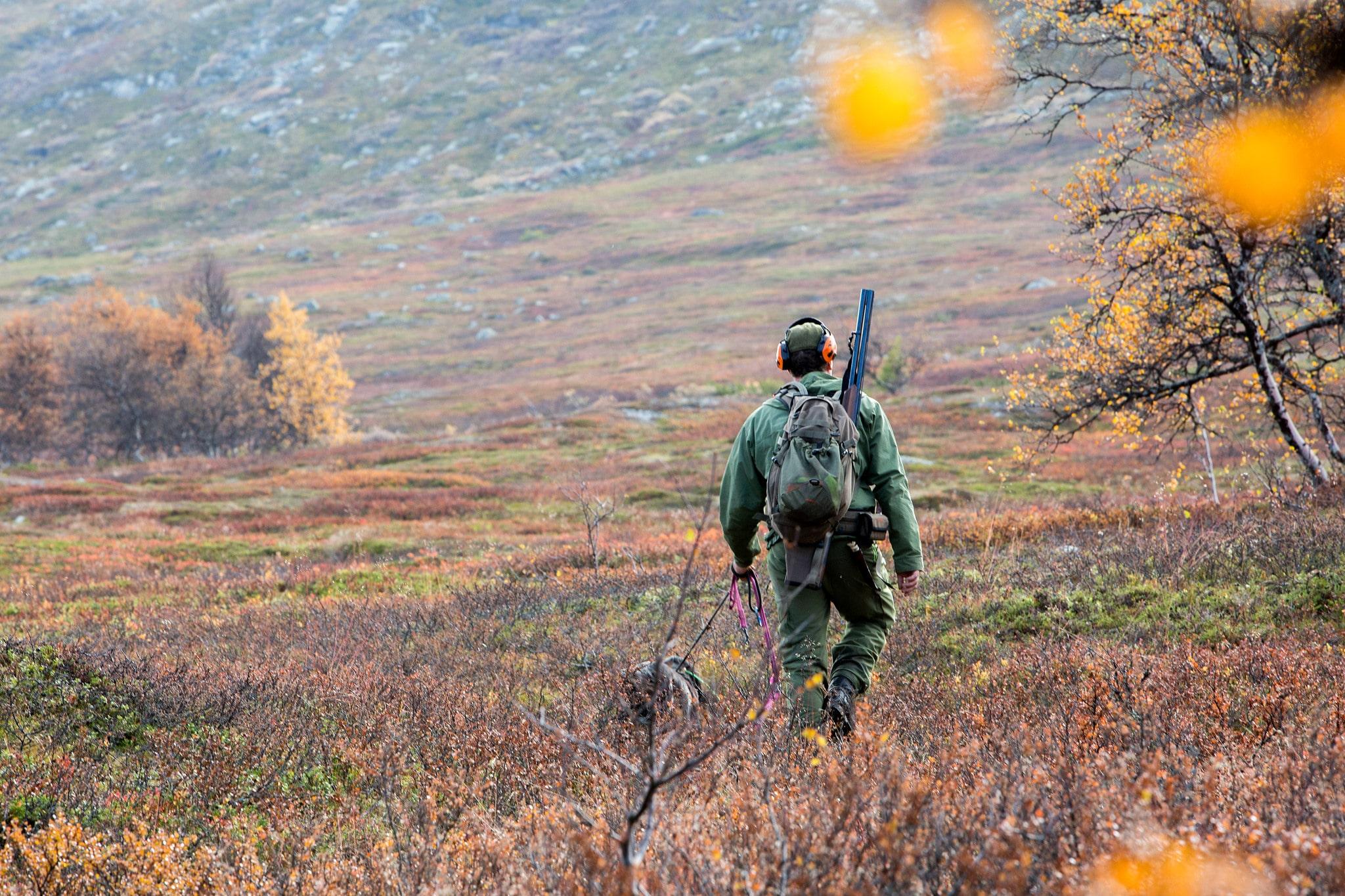 Småviltjakten stör renskötseln. Men älgjakten gör det inte, anser länsstyrelsen i Jämtlands län.