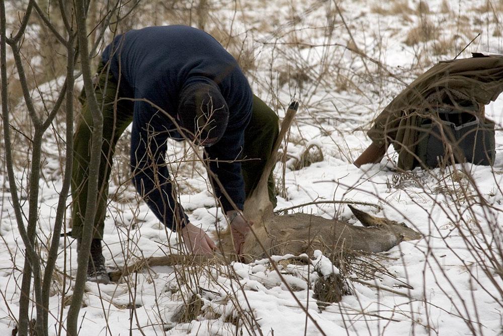 Enligt en nyligt förkunnad dom i Kammarrätten har ett viltvårdsområde rätt att avlysa all rådjursjakt inom området. Foto: Olle Olsson