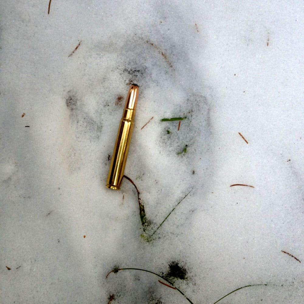 Är det här ett spår från en varg? Bedöm själva. Spåret är fotograferat i Svenneby, Östergötland. Foto: Privat