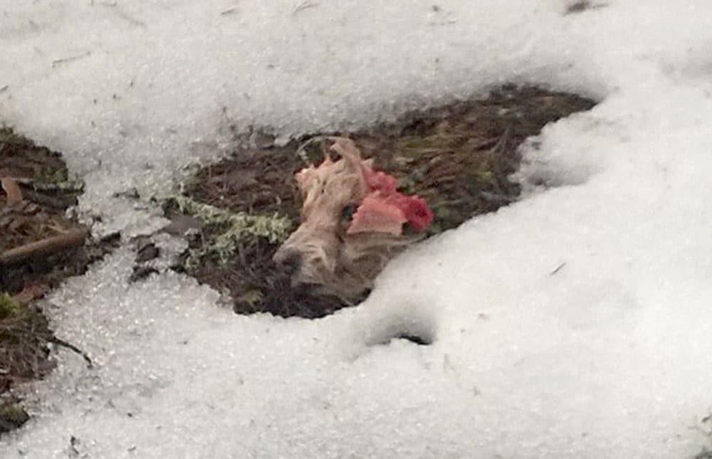 150 meter från huset hittades huvudet. Foto: Privat
