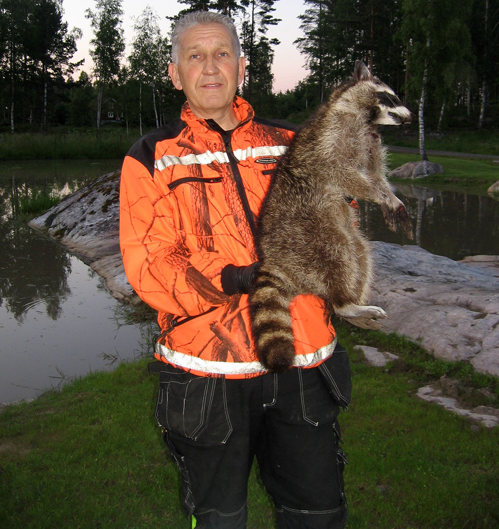 Roger Lundberg med den tvättbjörn han fångade 20 juni 2013. Foto: Mattias Klingstedt