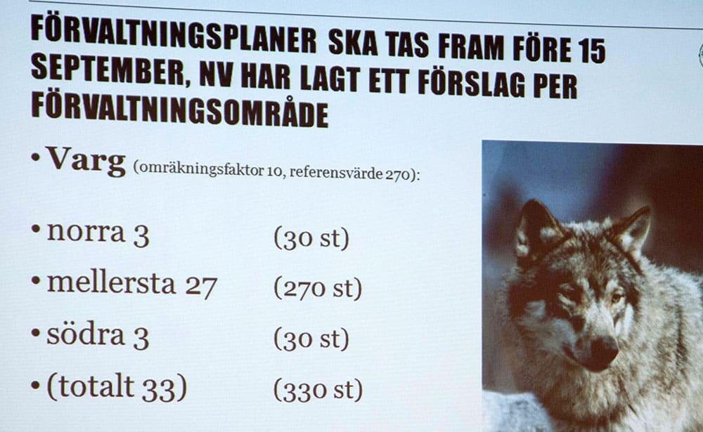Föreslaget golv för vargstammen. Foto: Jan Henricson