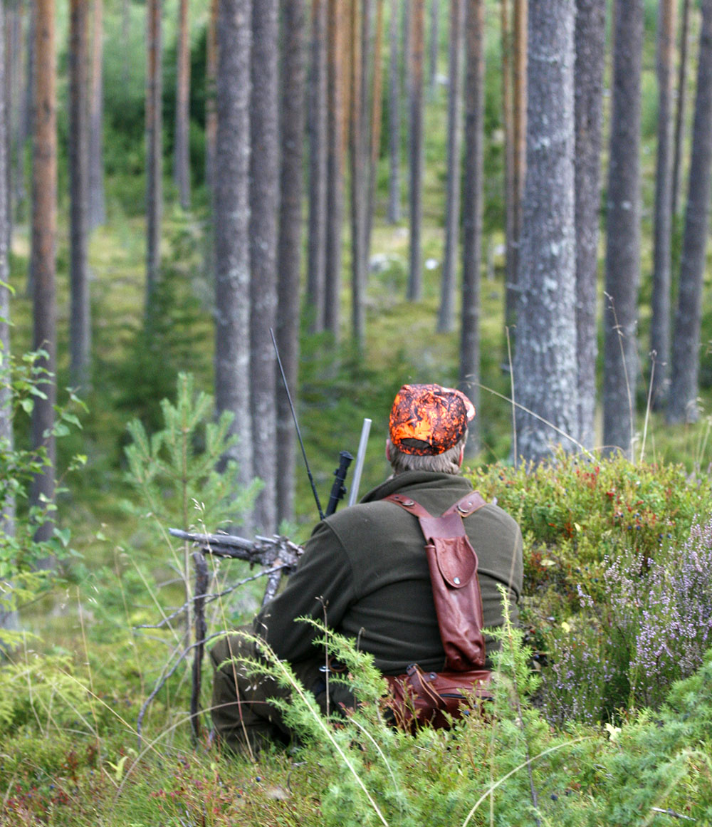 Det finns inga stora skillnader mellan stad och landsbygd för acceptansen för jakt. Den är hög i hela landet. Foto: Olle Olsson