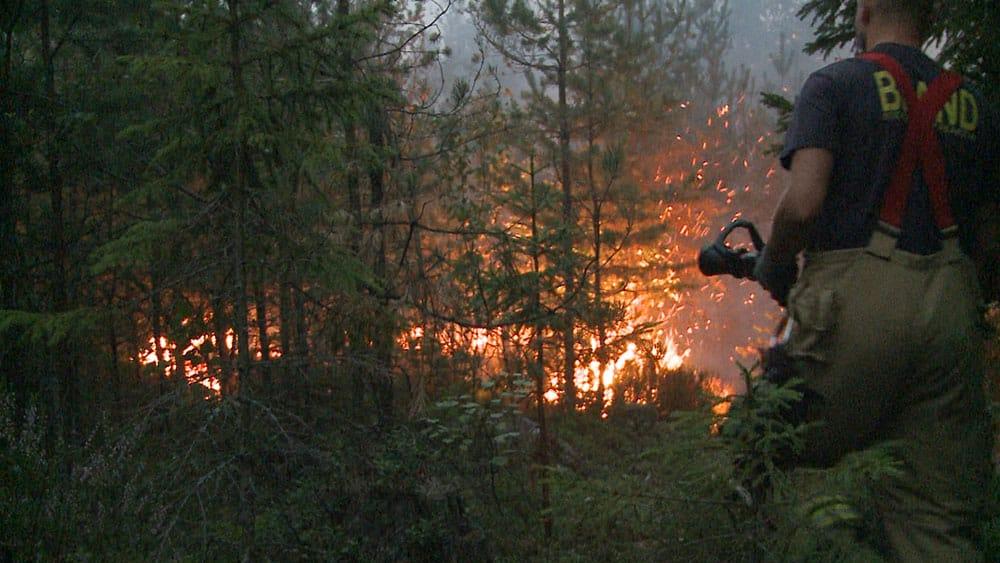 Mycket talar för att klövviltet redan återvänt till brandområdet och att jakt kan genomföras. Foto:MSB