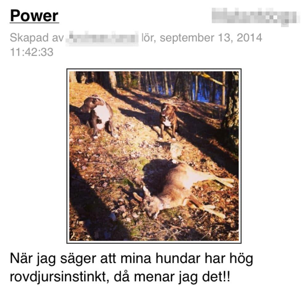 I ett blogginlägg skriver ägaren om sina hundars förträfflighet som rådjursjägare.