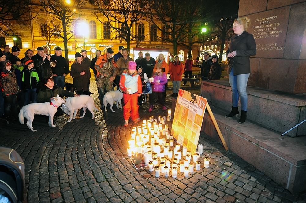 Cirka 200 personer hade i onsdags kväll sökt sig till torget i Karlstad för att visa sitt stöd för de hundägare som fått sina hundar dödade av vargen. Foto: Boo Westlund