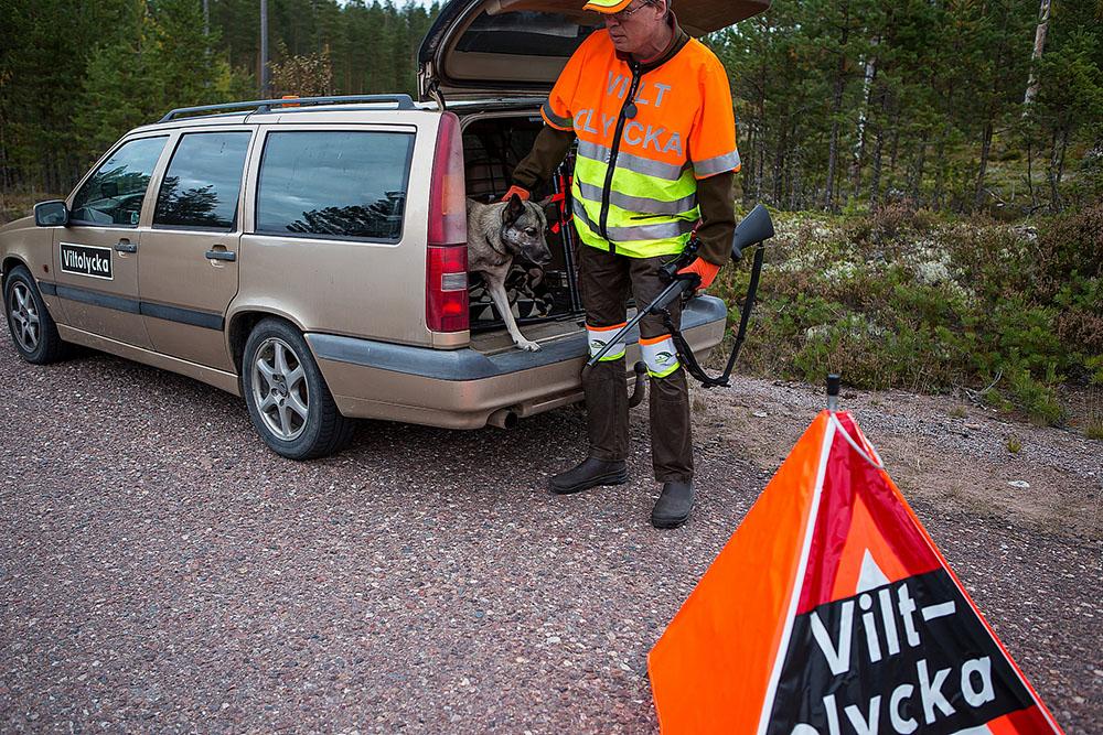 Många eftersöksjägare, sannolikt tusentals, får vänta på sina ersättningar för utförda trafikeftersök. Foto: Torbjörn Lektell