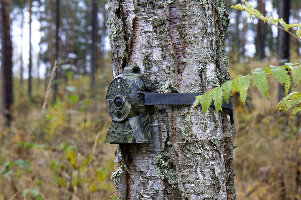 Det ska bli lättare att använda åtelkameror. Riksdagen ger nu regeringen i uppdrag att se över reglerna. Foto: Olle Olsson