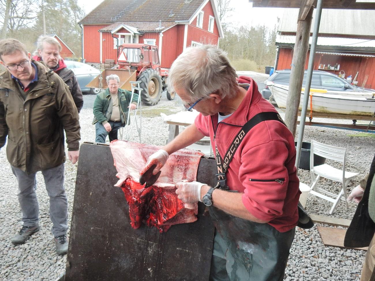 Sven-Gunnar Lunneryd visar Blekingejägarna hur sälskinnet tas om hand på bästa sätt. Foto: Privat