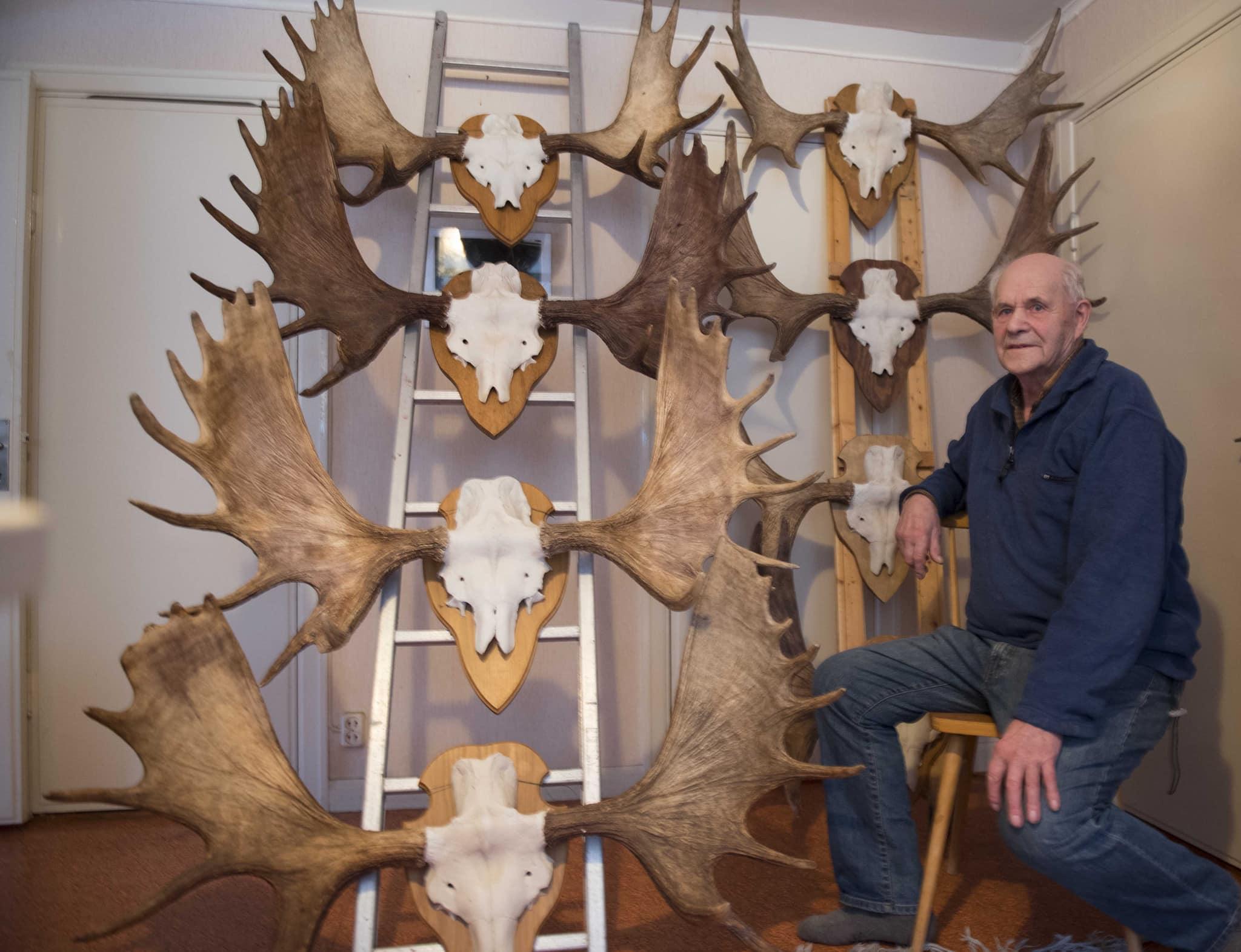 Hans Magnussons hornsamling är makalös. Hur många mil han gått i skog och mark för att hitta alla horn går inte ens att föreställa sig. Foto: Jan Henricson
