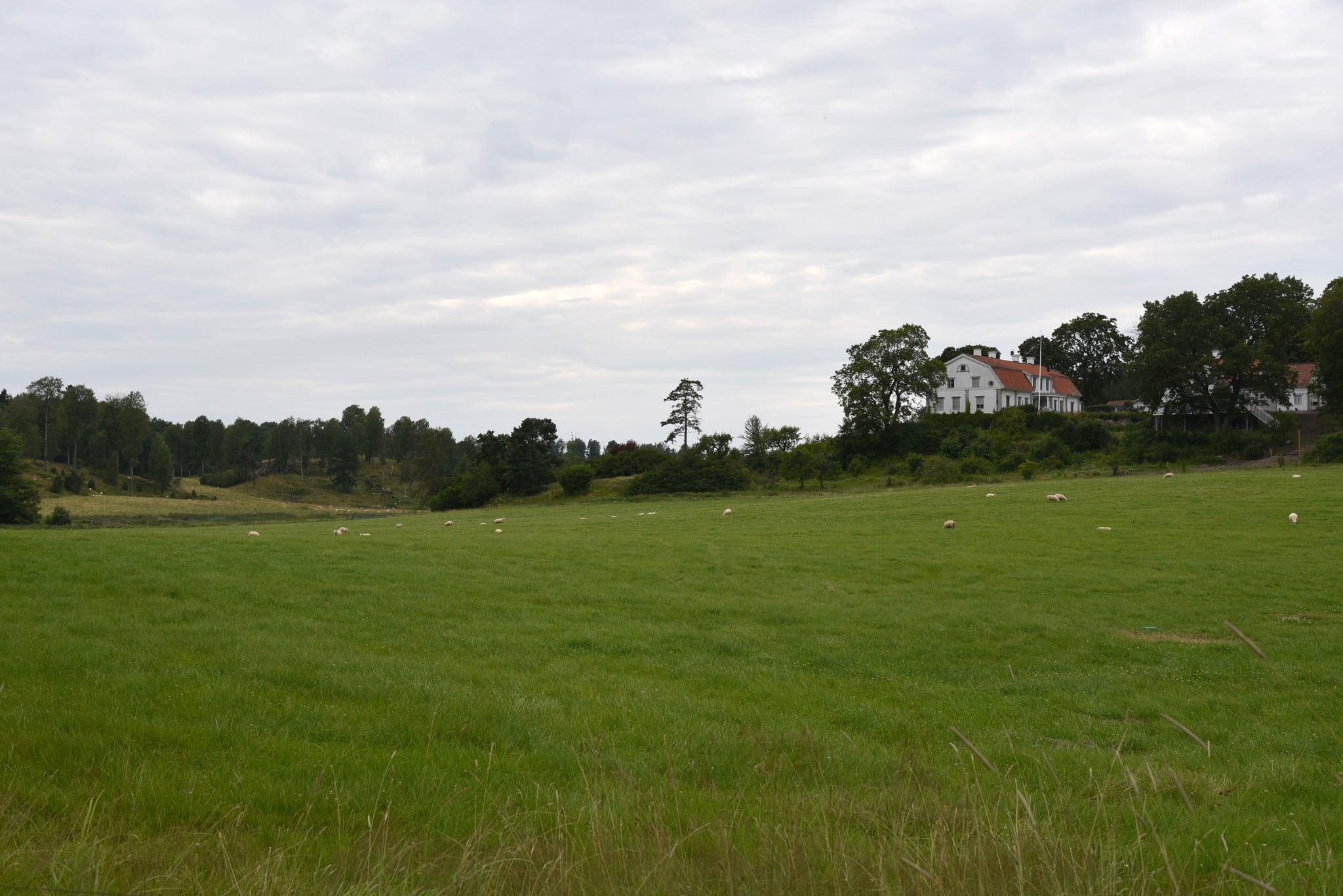 Molstabergs gård, på gränsen mellan Södermanland och Stockholms län, har drabbats av ännu ett vargangrepp. Foto: Martin Källberg