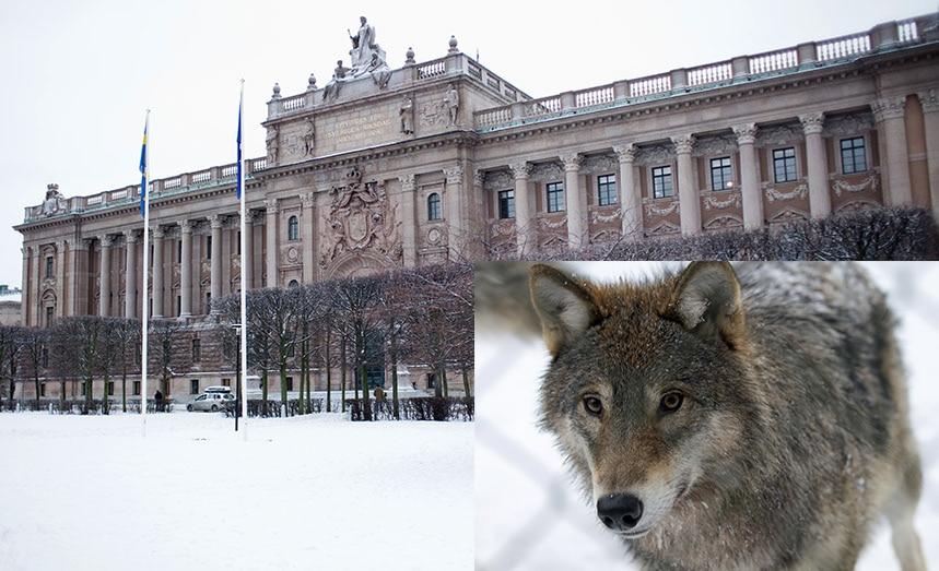 Regeringen har nu två tydliga tillkännagivanden från riksdagen om att rovdjurspolitiken från 2013 ska ligga fast.