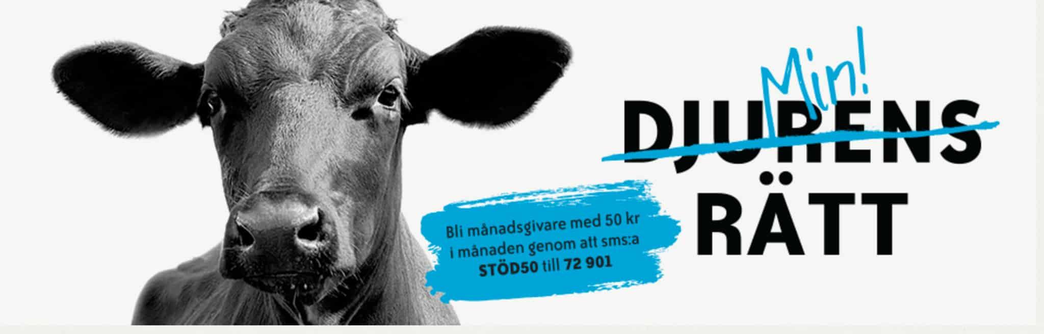 Djurens Rätt har inte klarat Svensk Insamlingskontrolls mål sex av de nio senaste åren. Skärmdump: Djurens Rätt