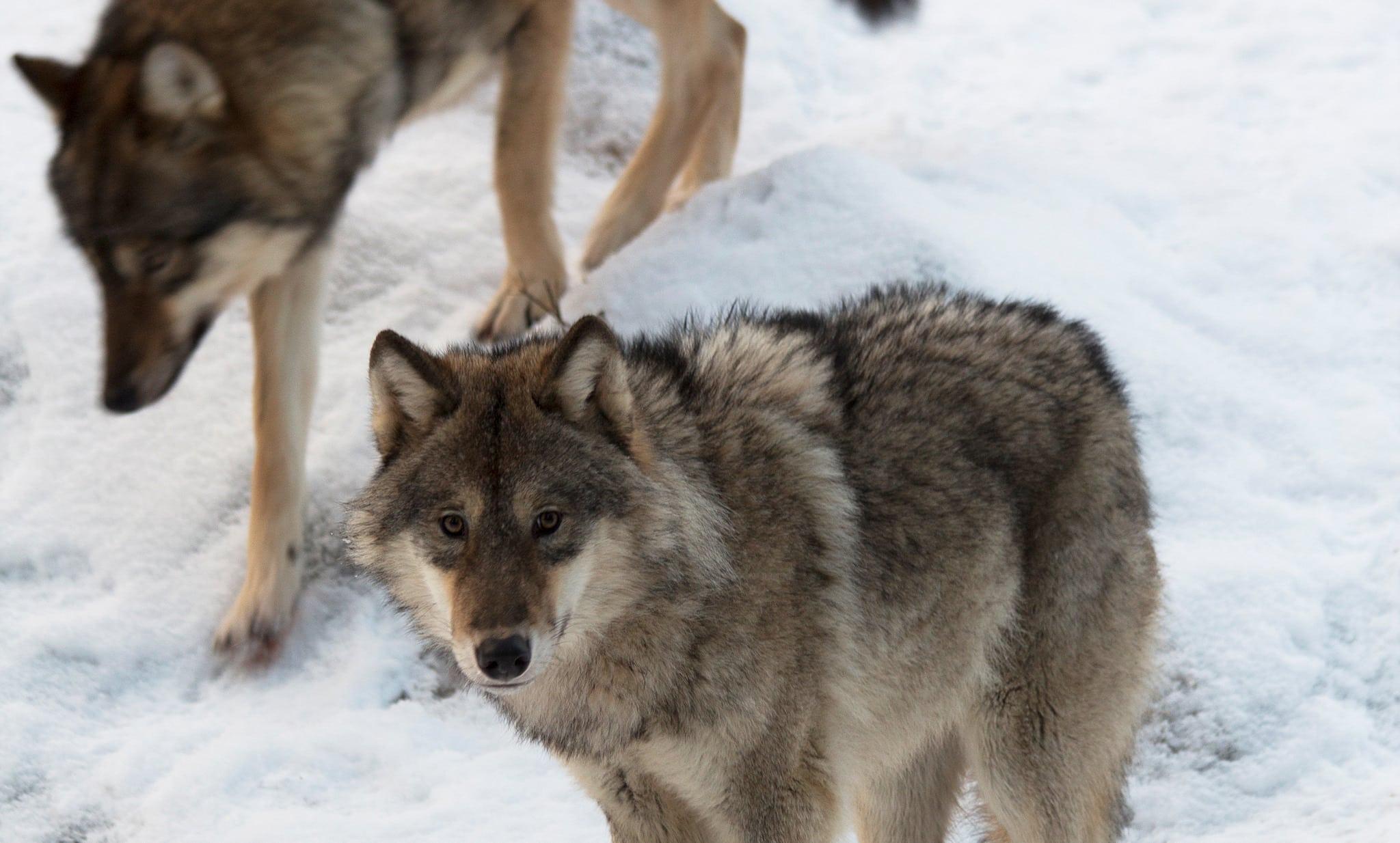 Foto i Lycksele djurpark: Lars Nilsson