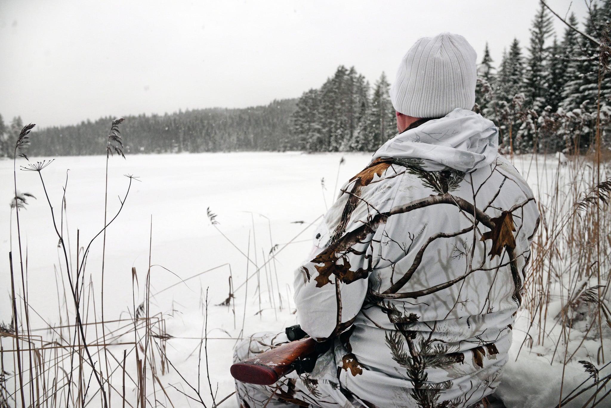 Tiden för vargjakt rinner ut när licensjaktbeslutet förhalas i domstolsprocesser. Naturvårdsverket avvisar länsstyrelsernas och Jägareförbundets begäran om förlängd vargjakt. Foto: Lars-Henrik Andersson