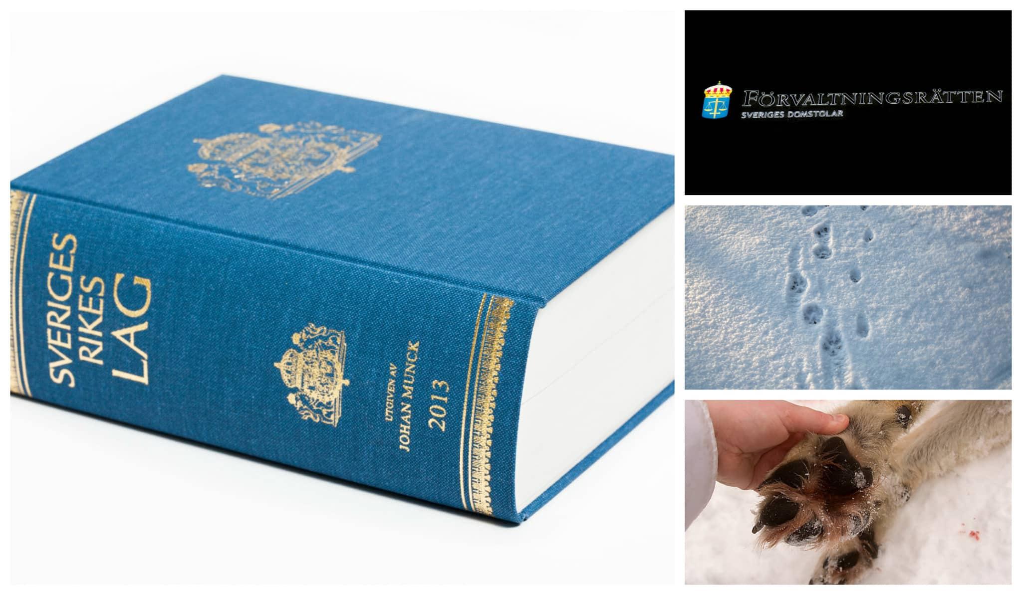 Licensjakten på varg stoppas av Förvaltningsrätten i Karlstad.