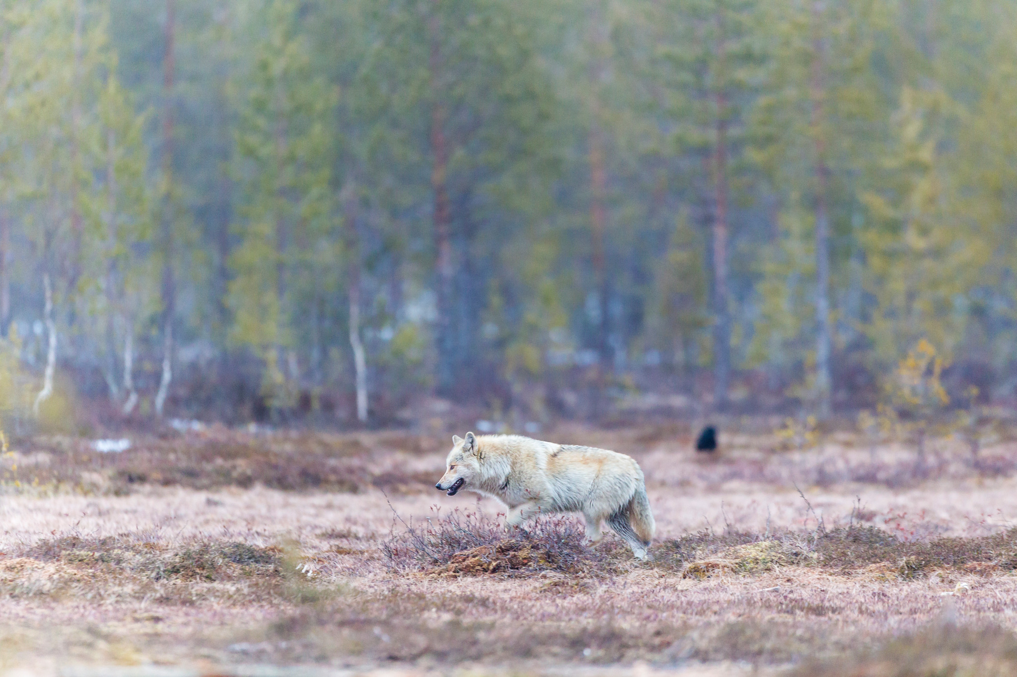 Foto: Kjell-Erik Moseid