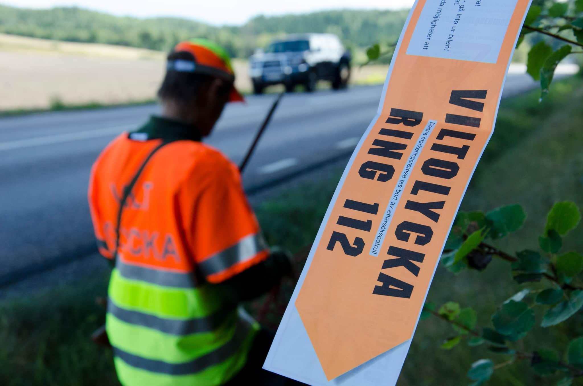 Älgolyckorna fortsätter att minska, medan trafikolyckor med rådjur och vildsvin ökar. Foto: Martin Källberg