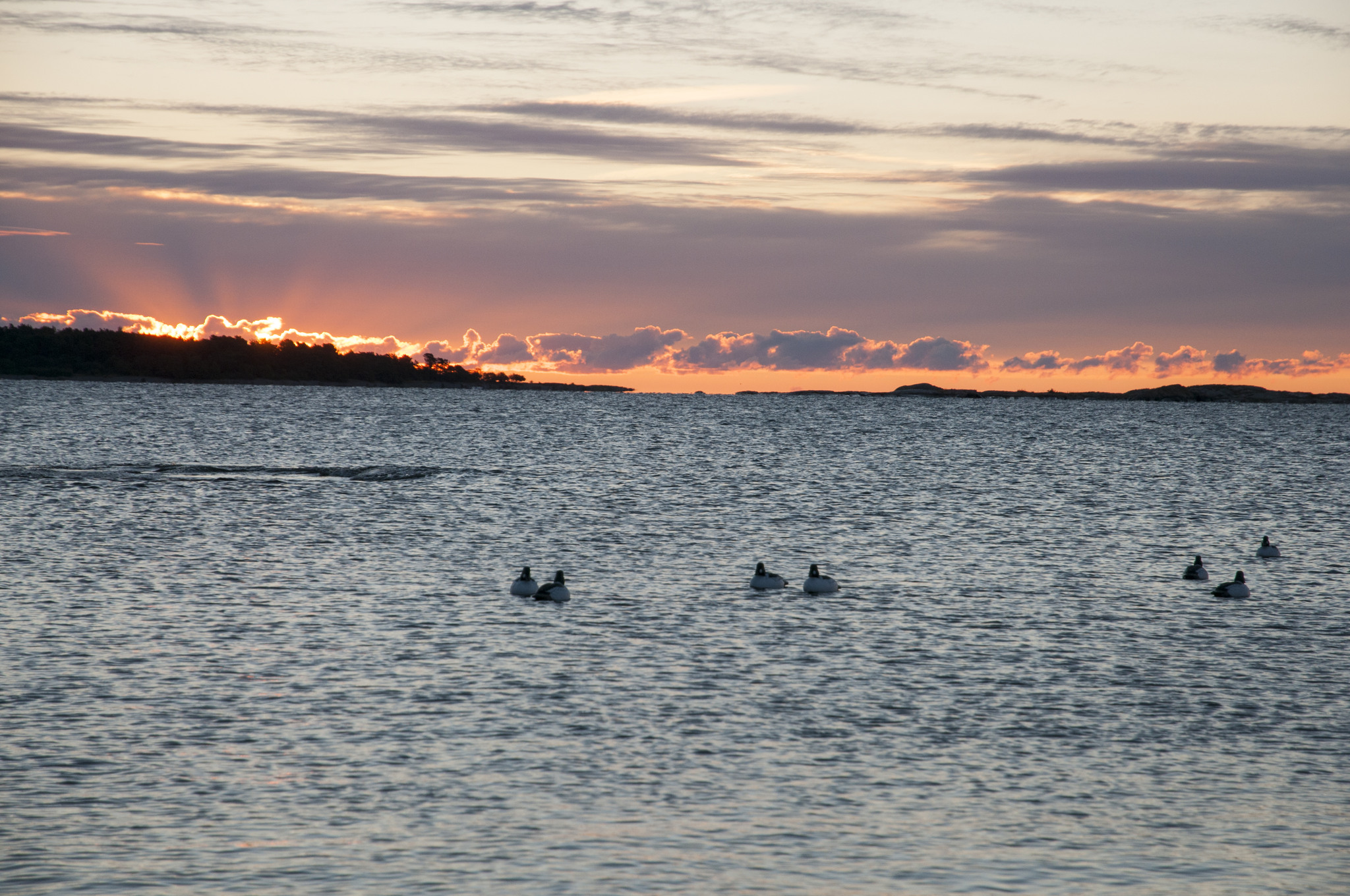 Sjöfågeljägarna i Blekinge vill ha tillbaka jakten på de statligt ägda kronoholmarna som den var förut. Foto: Jan Henricson