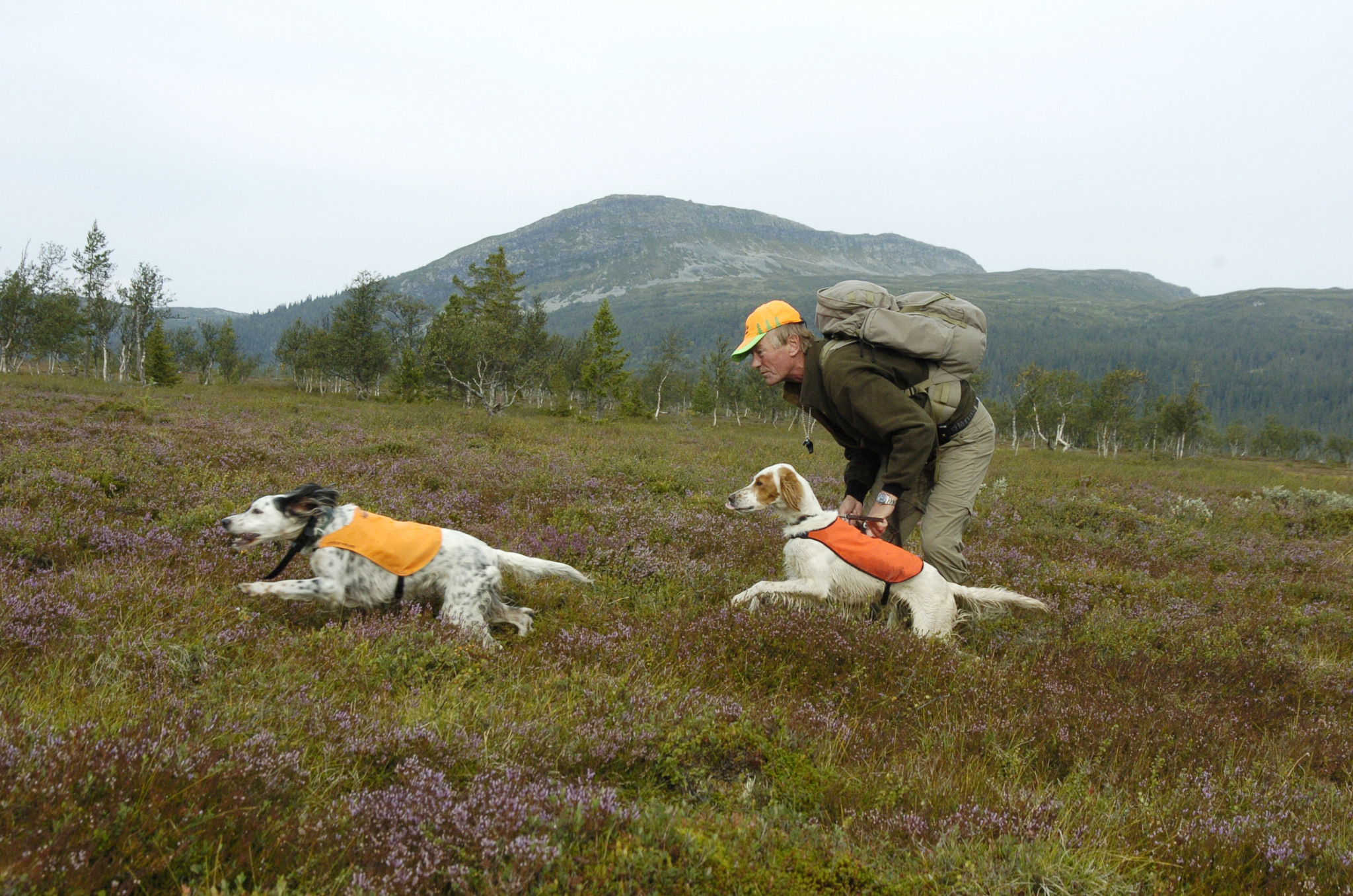 Att ge besökande jägare en helhetsupplevelse med jakt, hundar, guider, mat och boende är det bästa sättet att bedriva jaktturism, skriver jaktföretagarna som stöder förslagen till ändringar i rennäringsförordningen. Foto: Jan Henricson