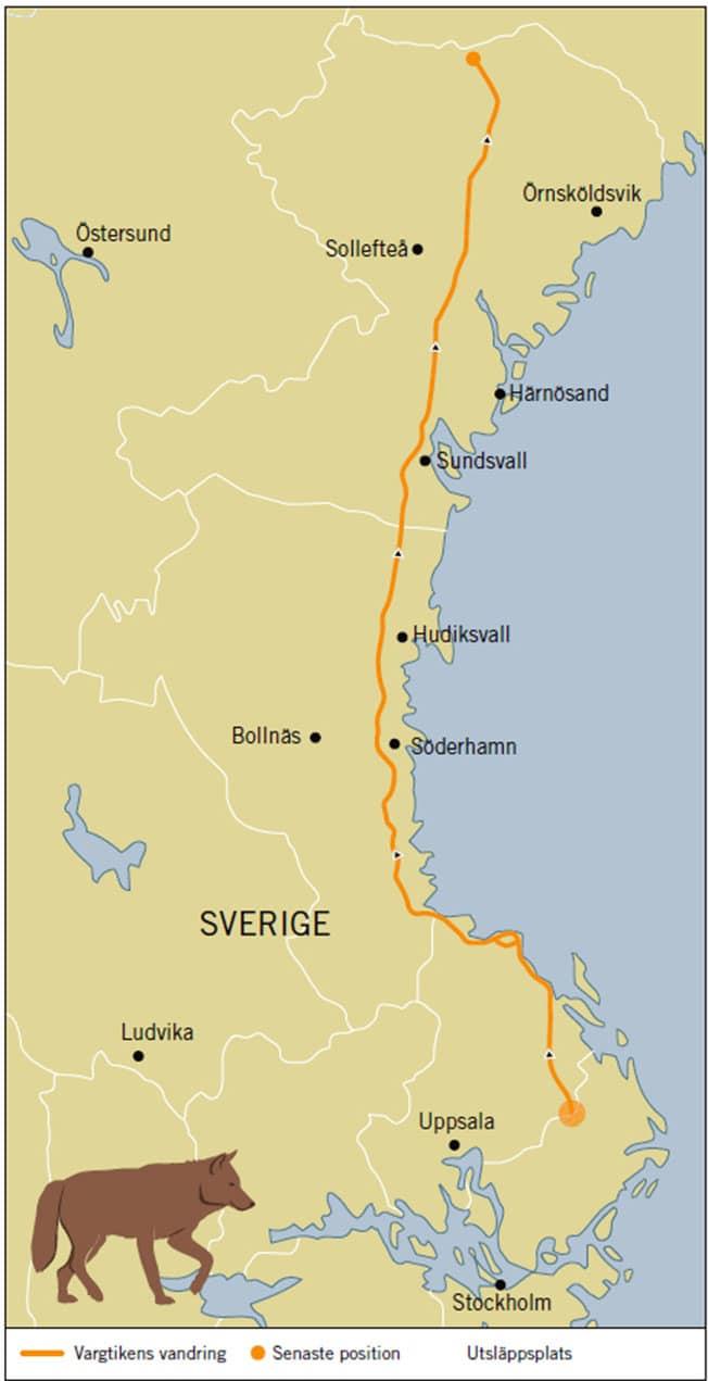 Junsele Karta Sverige.Vasterbotten Archives Sida 123 Av 123 Svensk Jakt