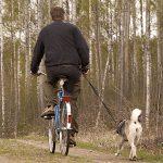 Cykelmotionering i lagom takt några kilometer är utmärkt för att hålla hunden i trim under sommaren, men kanske inte när det är som allra varmast. Foto: Olle Olsson