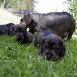 Många faror lurar på hunden i sommargrönskan. Foto: Olle Olsson
