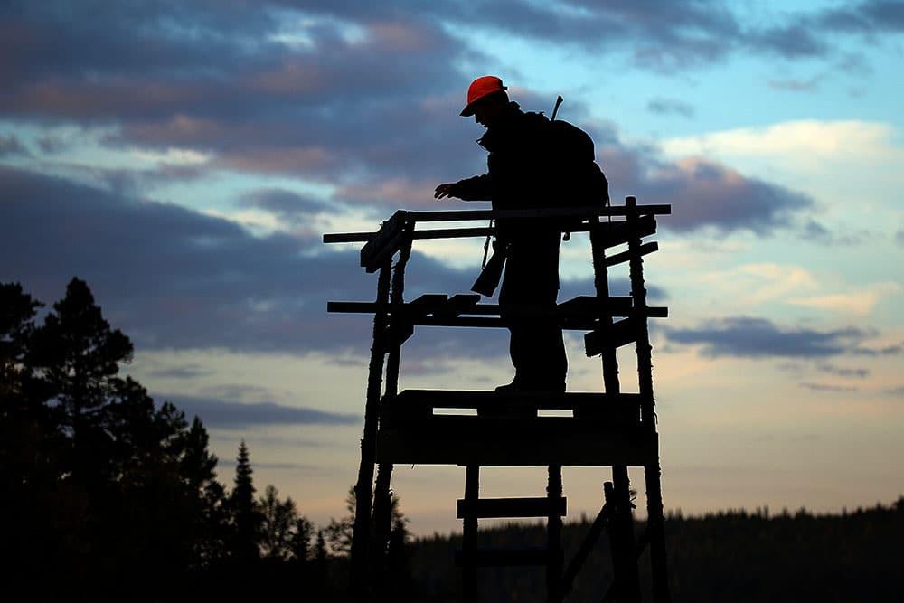 Älgjaktsvecka i Jämtland. Foto: Tobbe Lektell