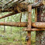 Materialet till stockfällan utgörs uteslutande av rundvirke som tas direkt ur skogen. Foto: Bernt Karlsson
