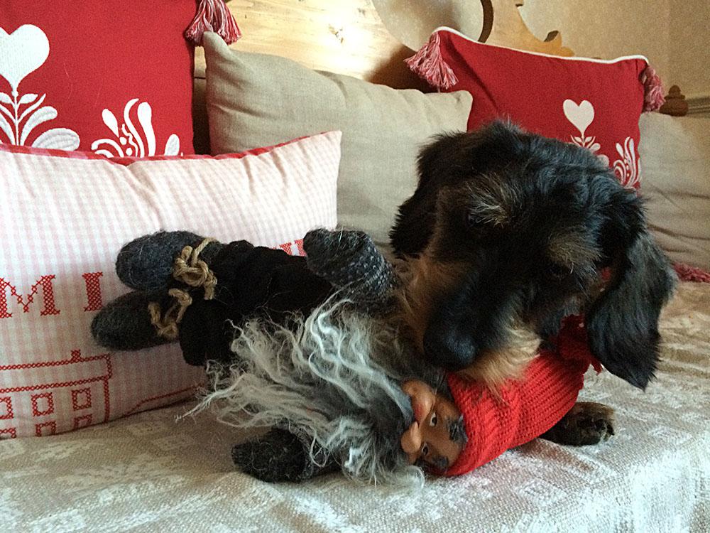 Julpynt kan vara frestande för hundar.