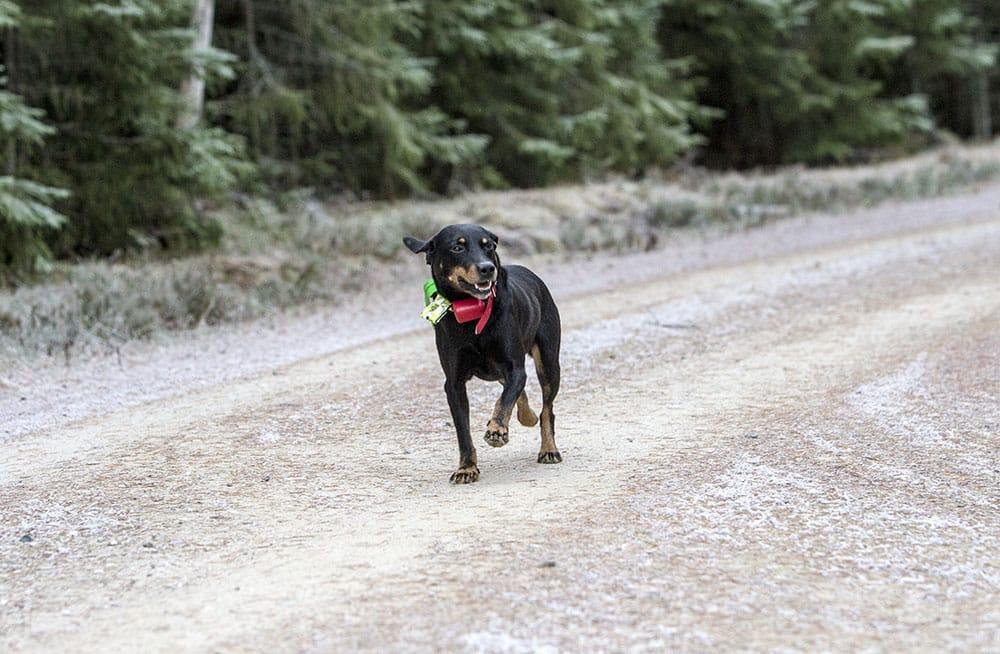 Ställ frågor till Svensk Jakt om jakthundar. Foto: Olle Olsson