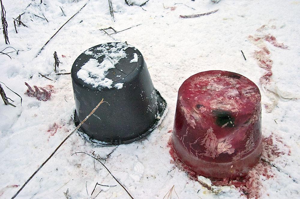 """Genom att göra en """"isglass"""" till räven får man åteln att räcka till. Foto: Bernt Karlsson"""