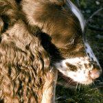 Samla på klövar under jaktsäsongen och lägg dem i frysen. Varje klöv går att använda flera gånger. Foto: Malou Kjellsson