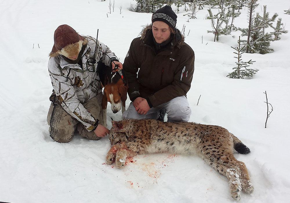 21-årige Viktor Åkerlund är en erfaren jägare, men det var på hans första lodjursjakt han lyckades fälla en 31 kilo tung hane. Foto: Privat