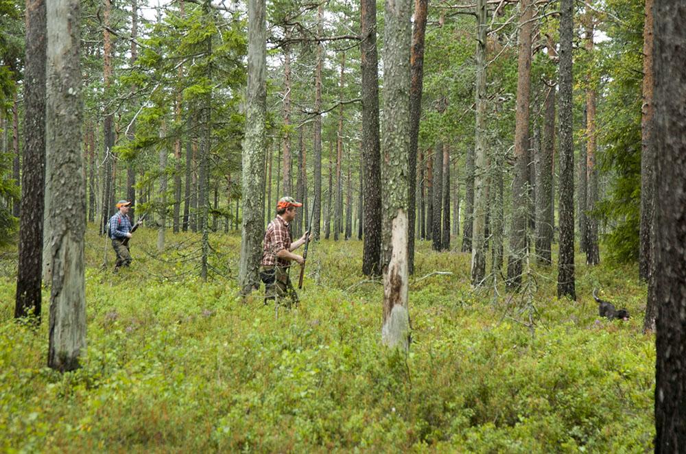 Skribenten är skarpt kritisk mot Bergvik Skogs agerande. Foto: Martin Källberg