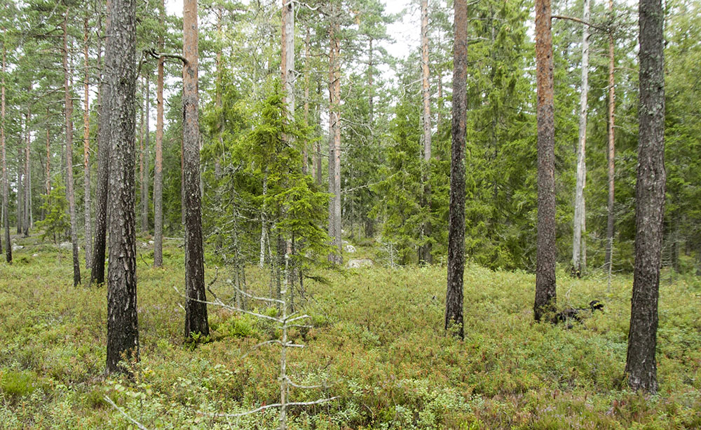 Gårdagens insändare med kritik mot Bergvik Skog följs nu upp av flera skribenter som delar denna uppfattning. Foto: Martin Källberg