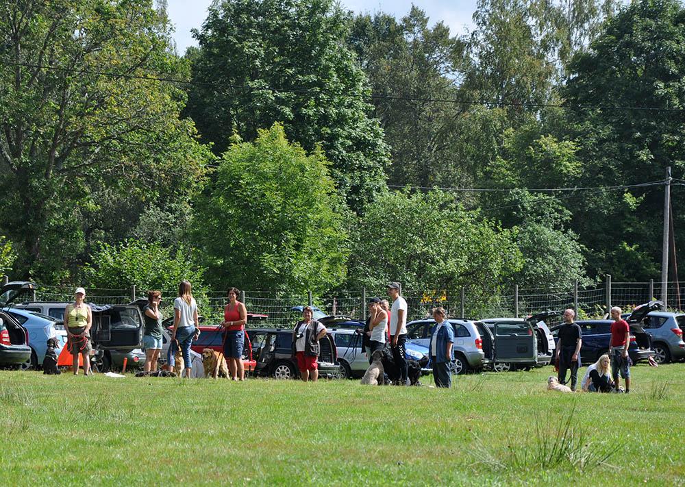 Cirka 50 personer och runt 40 hundar kom på Hundens dag. Foto: Birger Fransson