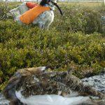 Insändarskribenten känner sig lurad på sin småviltjakt i fjällen av länsstyrelsen i Jämtland. Foto: Jan Henricson