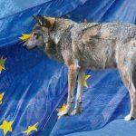 Nytt val, nya regeringar och ny EU-kommission att ta rygg på i rovdjursfrågan.